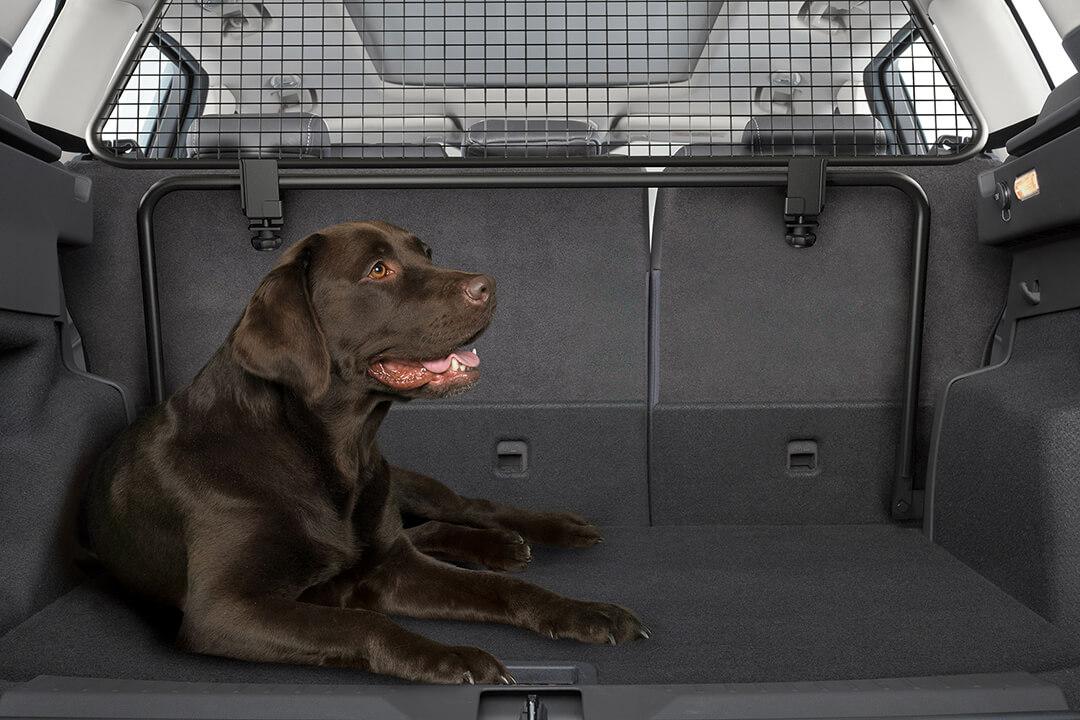 en-hund-i-bagageutrymmet-på-en-ford-kuga